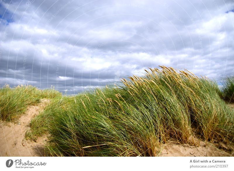 Windy Inch Natur grün blau Sommer Strand Ferien & Urlaub & Reisen Wolken Ferne Gras Freiheit Sand Landschaft Luft Küste Umwelt