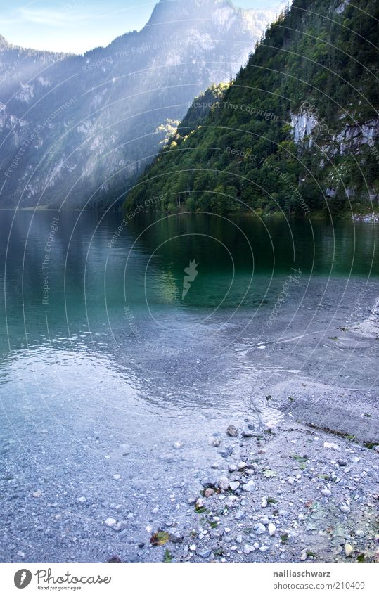 Königssee Natur Wasser grün blau Sommer Berge u. Gebirge grau See Landschaft Küste Umwelt Alpen Seeufer steinig Bayern Urelemente