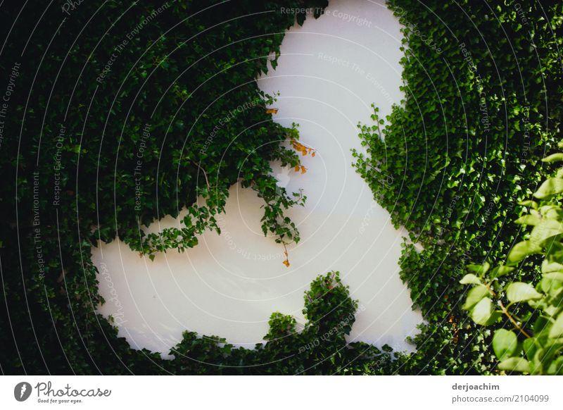Es ist noch Platz an der Wand. Das Grün hat innen noch etwas frei gelassen. Es ist noch nicht zugewachsen. exotisch Sommer Haus Natur Pflanze Schönes Wetter