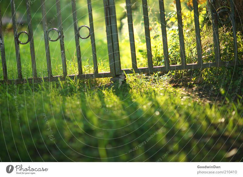 Ein Hauch Sommer Natur alt grün Gras braun Umwelt Rasen Schönes Wetter Bildausschnitt Tor aussperren Gartenzaun einsperren Metallzaun umfrieden eingezäunt