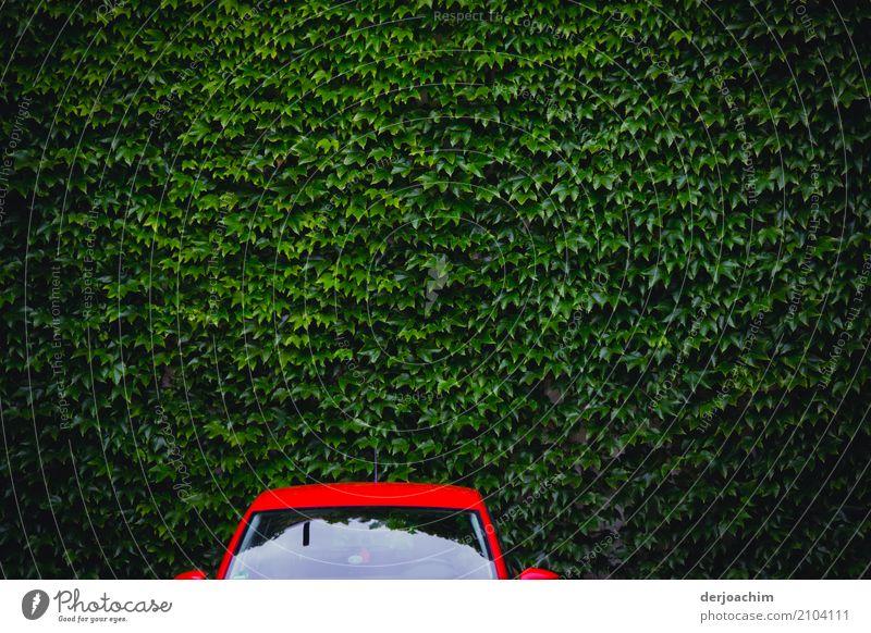 Grün und Rot. Parkendes Oberteil eines Rotes Autos vor Grünen Blätternwand. Die Autoscheibe refektiert etwas. Design harmonisch Ferien & Urlaub & Reisen PKW