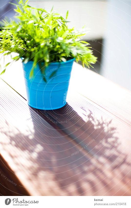 Tisch-Strauch Sonne grün blau Pflanze Sommer Blatt Sträucher Blühend leuchten Holzbrett Schönes Wetter Bambus Blumentopf Grünpflanze Zweige u. Äste