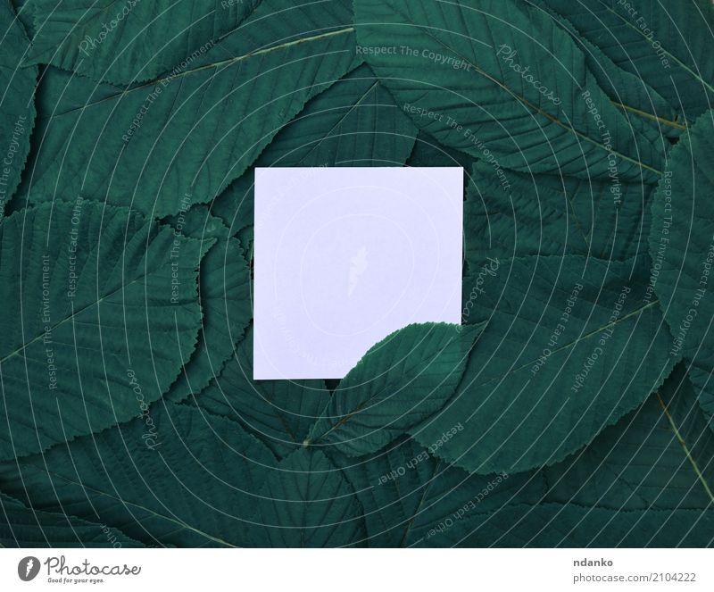 Weißes leeres Blatt unter Blättern Natur grün weiß Business Büro Papier Sauberkeit Schriftstück Material Konsistenz Mitteilung blanko Kastanie Attrappe