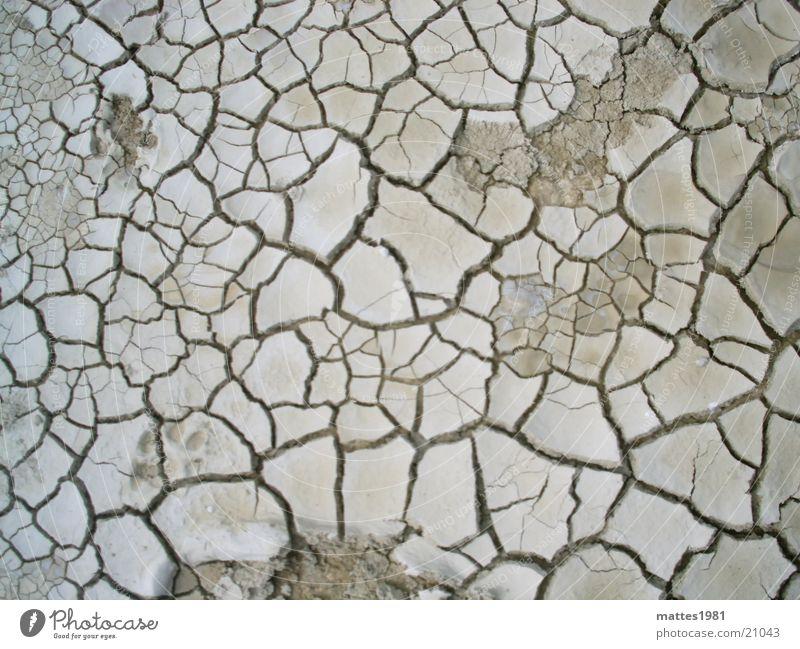 durstig alt Tier Wärme Leben Tod Linie Erde Wetter Angst Luft Haut Klima Bodenbelag Netzwerk