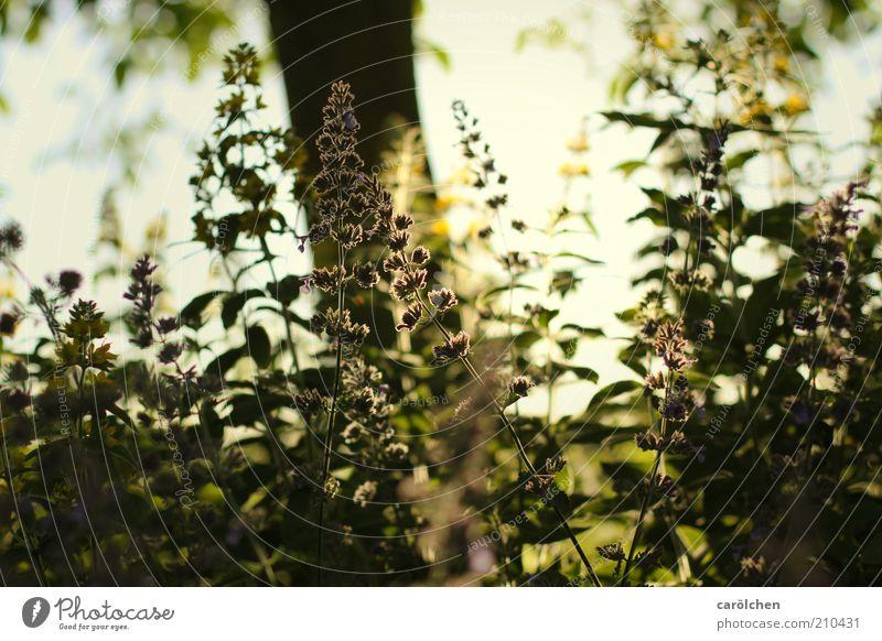 im Schatten Natur Landschaft Pflanze Sonnenlicht Baum Blume Gras Sträucher Garten gelb grün Gegenlicht Baumschatten Wärme Lichtspiel Wachstum Farbfoto