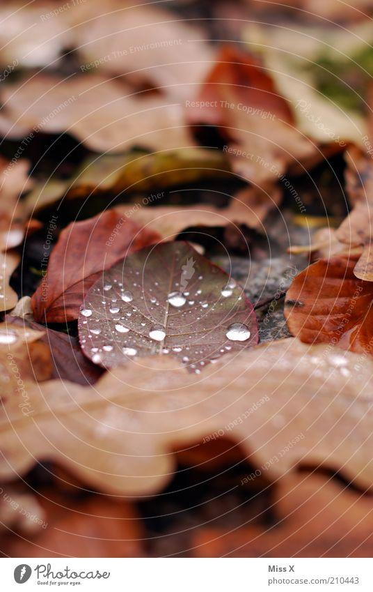Laub Natur Wassertropfen Herbst Blatt nass trist braun Verfall Vergänglichkeit Herbstlaub herbstlich Tau Farbfoto Außenaufnahme Nahaufnahme Menschenleer