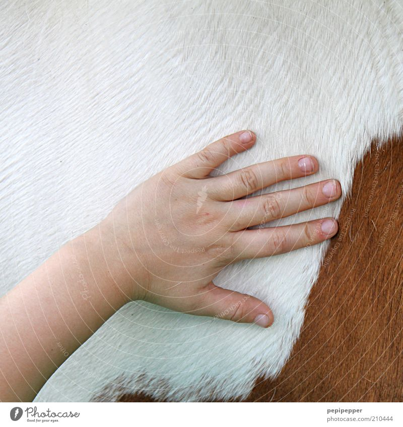 pferdepflege Reiten Kind Mädchen Hand Tier Pferd berühren Sauberkeit Farbfoto Außenaufnahme Nahaufnahme Detailaufnahme Tag Fellpflege Tierliebe Kinderhand