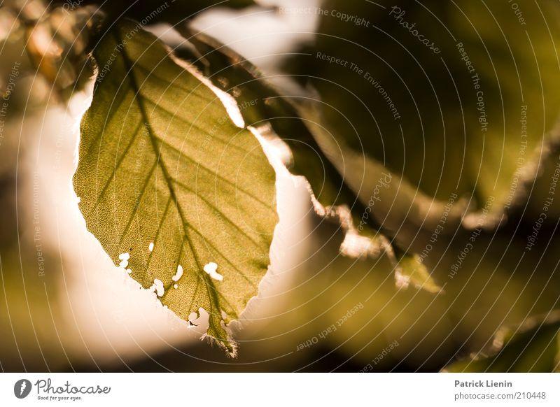 Abendstimmung Umwelt Natur Landschaft Pflanze Sonne Sonnenlicht Sommer Klima Wetter Schönes Wetter Baum Blatt Wildpflanze atmen beobachten Denken entdecken