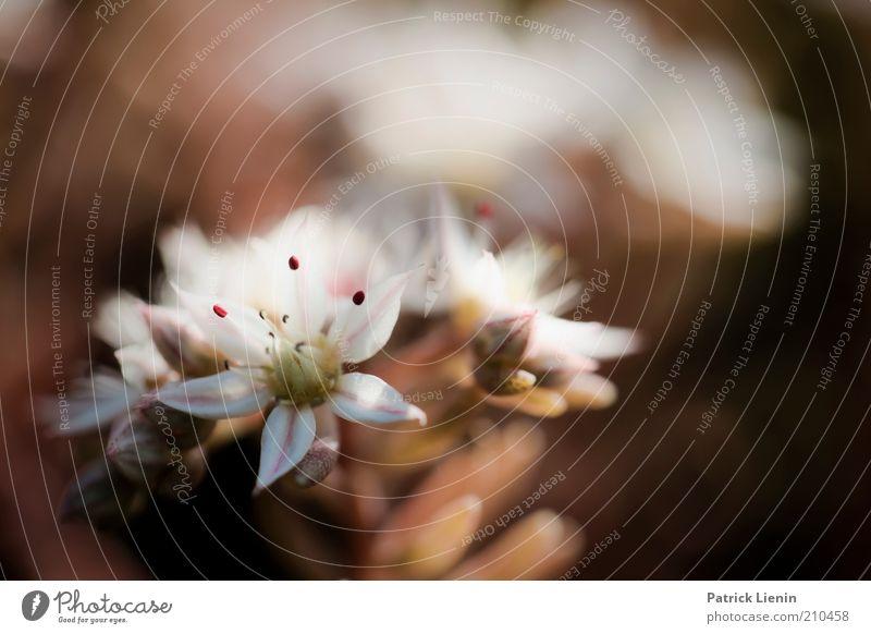 kleine Blüte Natur grün weiß schön Pflanze Sommer Blume ruhig Umwelt Wärme elegant frisch ästhetisch außergewöhnlich