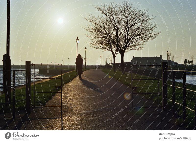 das wetter von morgen Ausflug Mensch 1 Wolkenloser Himmel Sonne Sonnenlicht Herbst Winter Wetter Schönes Wetter Baum Bucht Galway Republik Irland Hafenstadt