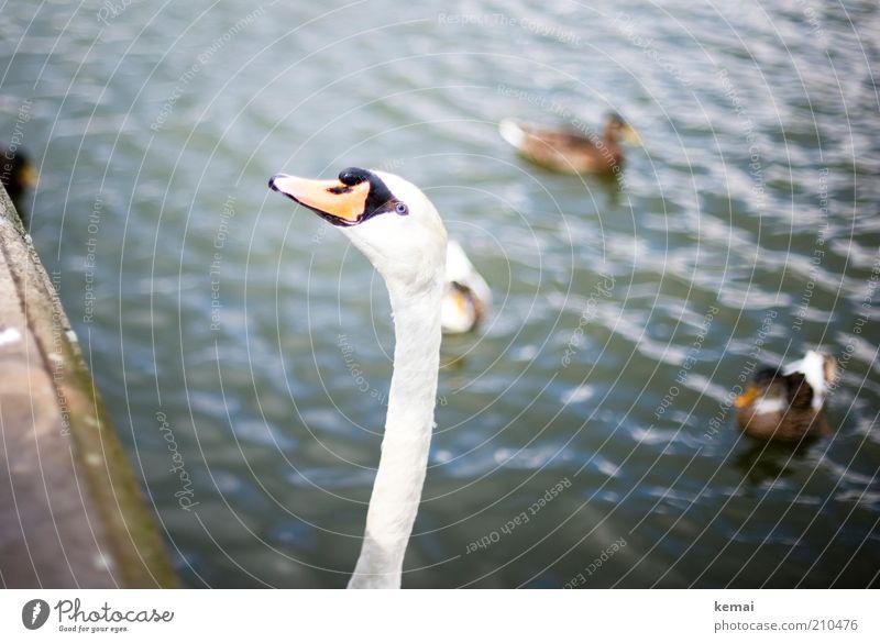 Long Neck Natur Wasser Tier Kopf Park Vogel Umwelt groß Tiergruppe Tiergesicht Wildtier Appetit & Hunger Hals Teich Ente Schnabel