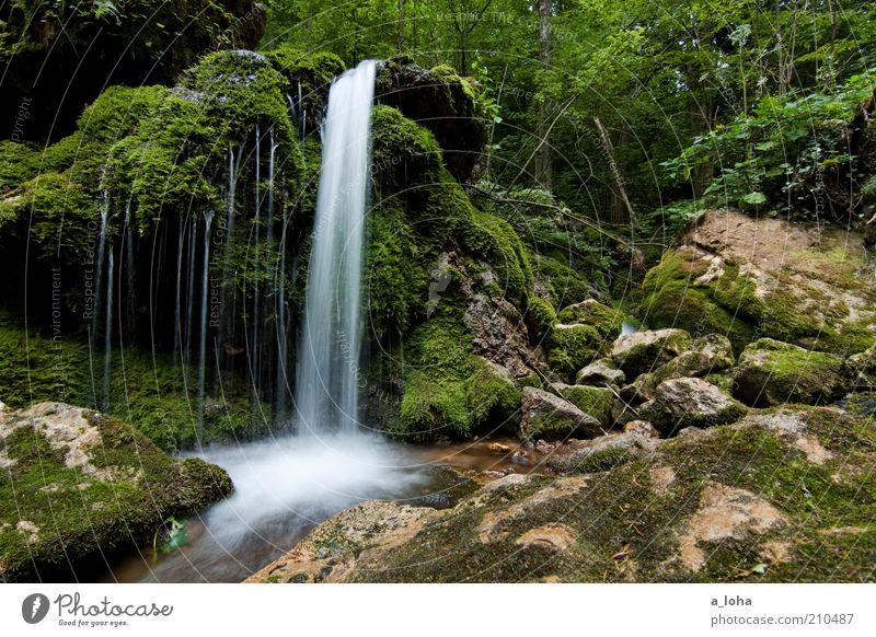 nature 1.1 Wasser Wassertropfen Pflanze Baum Gras Moos Wald Felsen Alpen Berge u. Gebirge Fluss Wasserfall Linie Streifen Tropfen Bewegung glänzend Wachstum