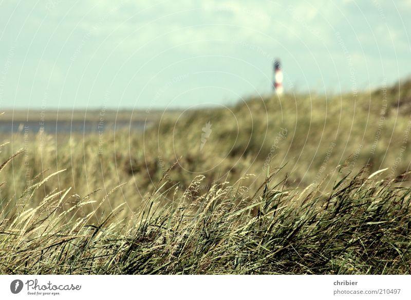 Küstenschutz Natur Landschaft Sommer Gras Strandhafer Dünengras Bucht Nordsee Insel Meer Schifffahrt Leuchtturm Leuchtfeuer leuchten Unendlichkeit blau grün