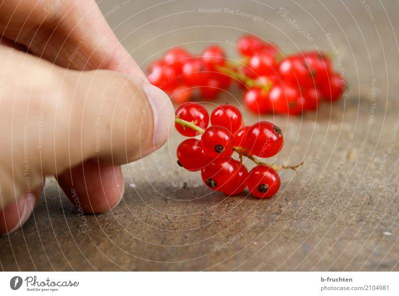 Rote Johannisbeeren Frucht Bioprodukte Vegetarische Ernährung Diät Mann Erwachsene Finger 30-45 Jahre festhalten frisch Gesundheit rot Beginn genießen Blüte