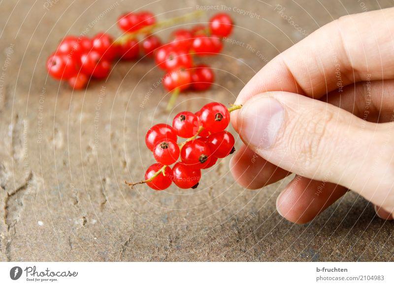 Rote Ribisel Mann rot Erwachsene Blüte Gesundheit Holz Frucht frisch genießen Tisch Finger festhalten Ernte Bioprodukte Beeren reif