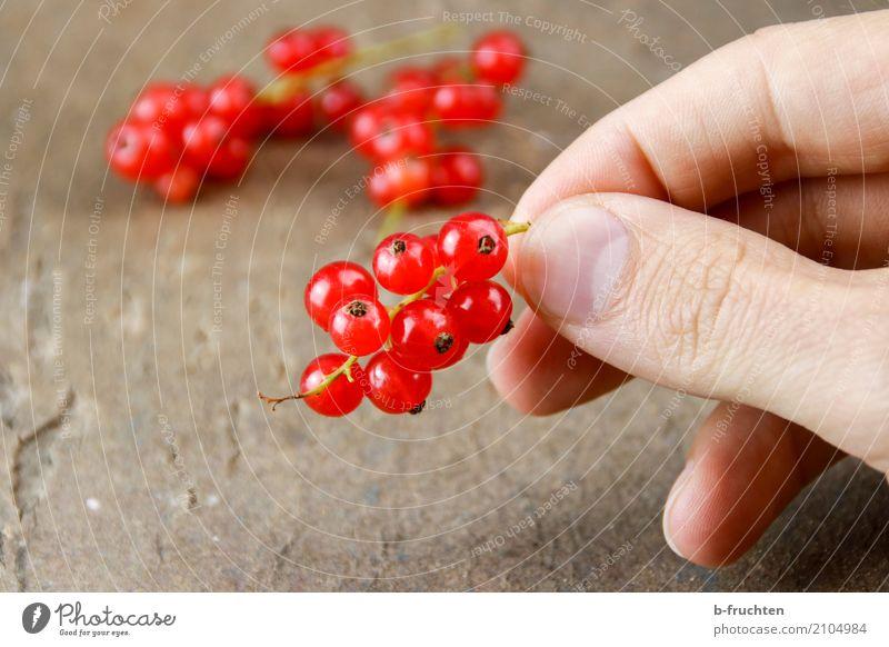 Eine Rispe Johannisbeeren Frucht Vegetarische Ernährung Diät Mann Erwachsene Finger 30-45 Jahre festhalten frisch Gesundheit rot genießen Blüte reif Ernte Tisch