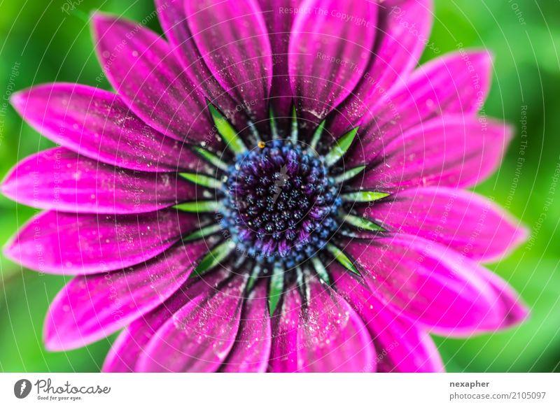 Floral Blumen-Nahaufnahme Umwelt Natur Pflanze Frühling Sommer beobachten Blühend Blick leuchten verblüht ästhetisch Duft fantastisch Fröhlichkeit frisch schön