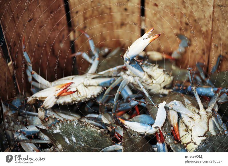 Mister Krabs? Tier frisch Ernährung viele Fischereiwirtschaft Meerestiefe Schere Delikatesse Meeresfrüchte Meerestier Krabbe Markt Fischmarkt Fischgericht