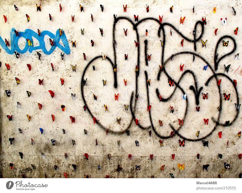 Schmetterlingarmee Wand Mauer Gebäude Graffiti Fassade einzigartig außergewöhnlich viele skurril hängen Sammlung Insekt seltsam Verschiedenheit