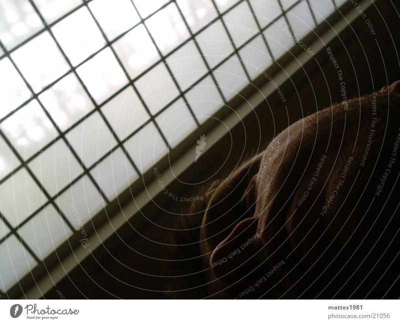 Im Loufre Mann Fenster Paris Frankreich Museum Dachfenster