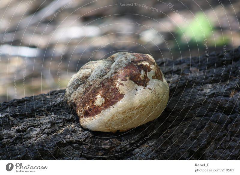 keep living Natur alt Baum Einsamkeit ruhig Holz grau Stein braun Erde Felsen außergewöhnlich Wachstum rund Vergänglichkeit Neugier