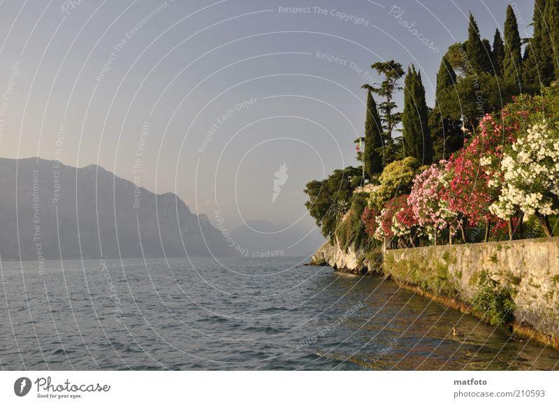 Sommer am Gardasee ! Ferien & Urlaub & Reisen Sommerurlaub Berge u. Gebirge Landschaft Wasser Sonnenlicht Schönes Wetter Seeufer blau Fernweh Farbfoto