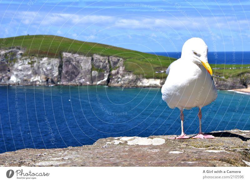 mal überlegen.... Himmel blau Wasser weiß grün schön Ferien & Urlaub & Reisen Meer Tier ruhig Landschaft Freiheit Küste Stein Vogel Zufriedenheit