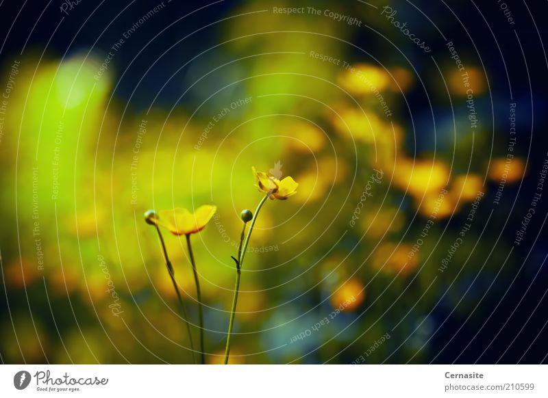 Natur Blume Sommer Einsamkeit dunkel Gefühle Stimmung Europa ästhetisch weich einfach dünn wild Sehnsucht