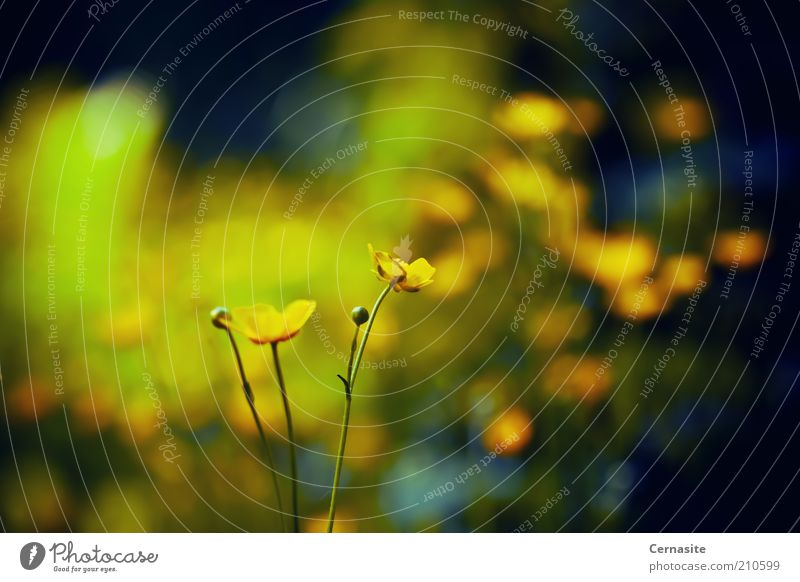 Neid Natur Sonnenlicht Sommer Blume ästhetisch dunkel dünn einfach wild weich Gefühle Stimmung Sehnsucht Einsamkeit Unschärfe Schweden Europa Eifersucht