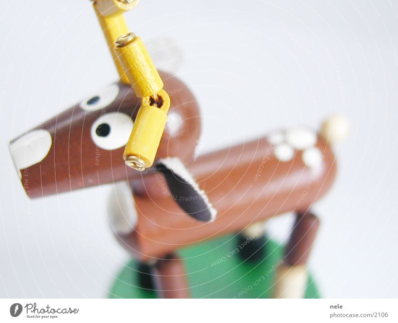 Hirsch Heinrich 02 Tier gelb Spielen oben Holz braun Freizeit & Hobby Suche Ohr Neugier Spielzeug Horn Hirsche Rentier