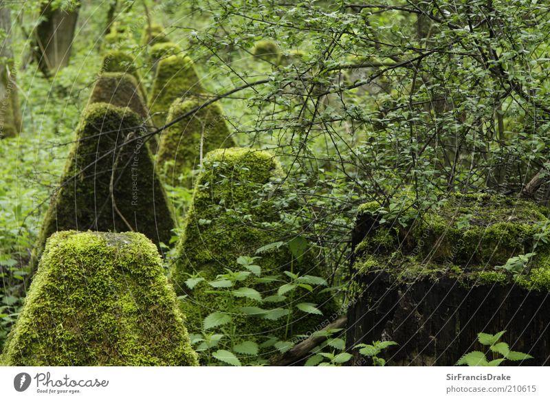 Vergessene Zeugen... Natur Landschaft Sträucher Moos Blatt Beton Schutz friedlich ruhig Ende Vergangenheit vergessen Farbfoto Außenaufnahme Menschenleer Tag