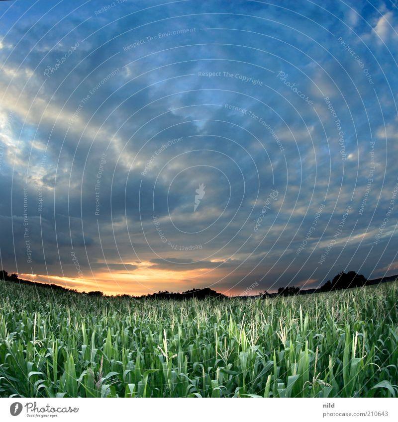 Festivalwetter Natur Himmel Pflanze ruhig Wolken Ferne Landschaft Feld Lebensmittel Umwelt Horizont fantastisch Landwirtschaft Frucht Sonnenuntergang Mais