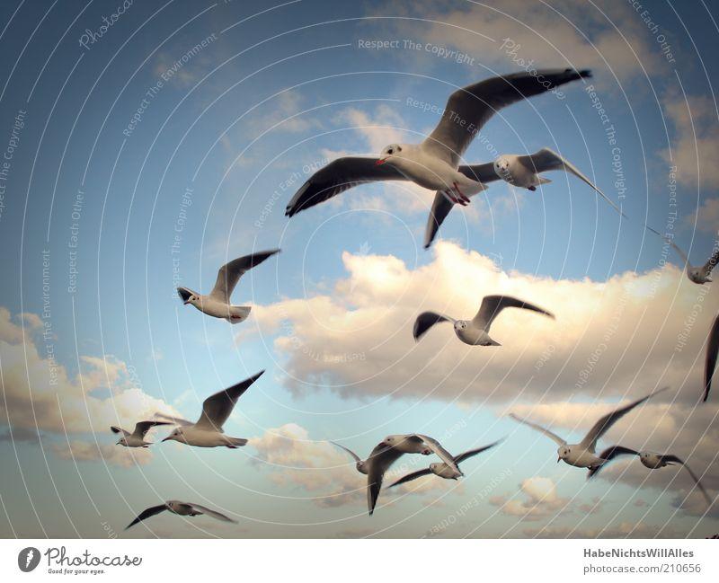 Möwenpick-Geschwader Freiheit Natur Tier Luft Himmel Wolken Wind Küste Ostsee Meer Wildtier Vogel Flügel Schwarm Leichtigkeit Neugier gleiten Farbfoto