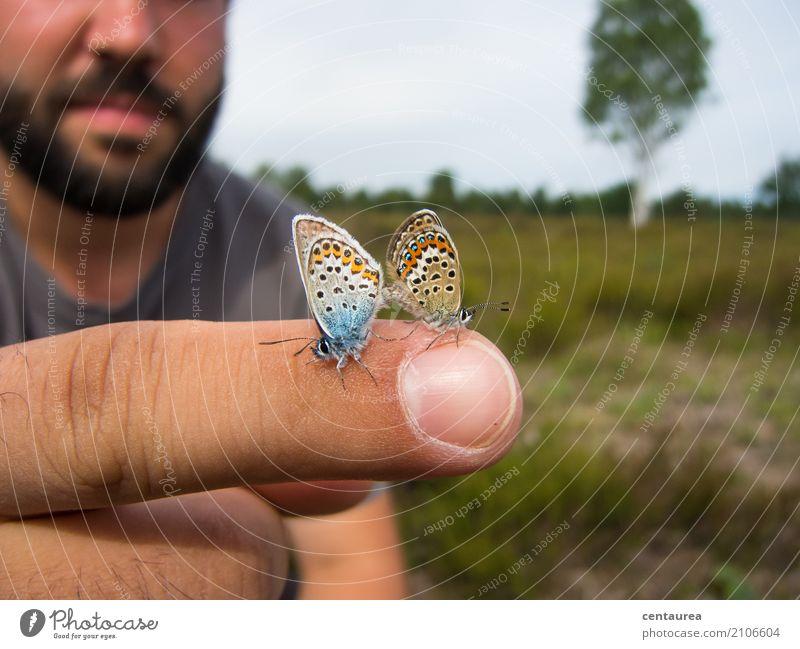 Paar auf dem Finger Natur Tier Sommer Schönes Wetter Garten Park Wiese Feld Heide Wildtier Schmetterling 2 Tierpaar beobachten frei blau braun orange weiß Glück