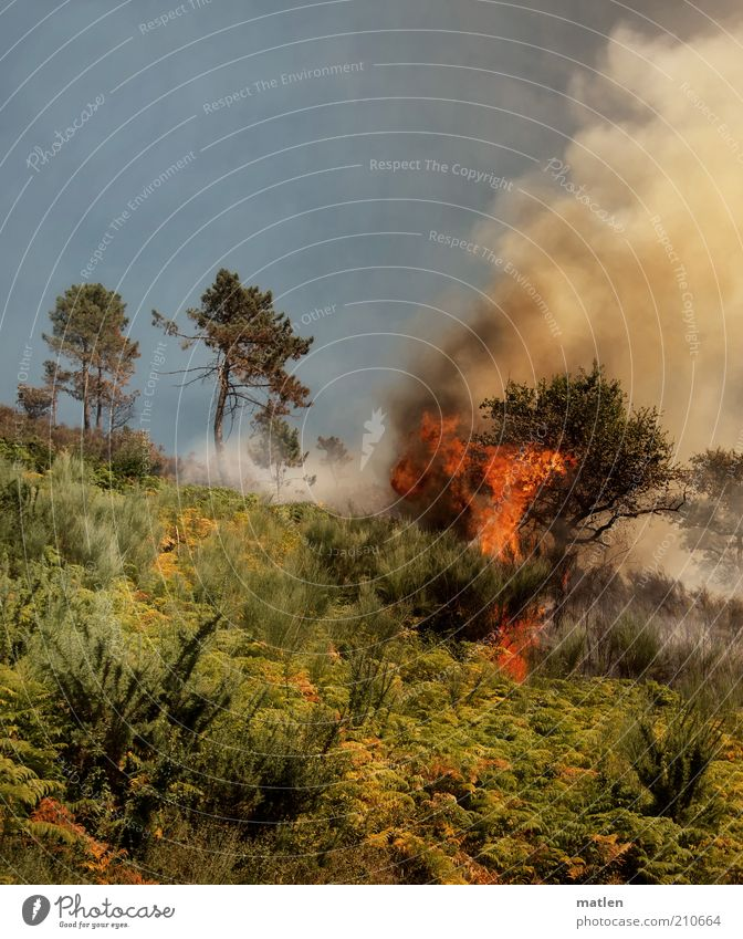 Feuerland Natur Himmel Baum Sommer Wald Gras Berge u. Gebirge Wärme Landschaft Sträucher bedrohlich heiß Rauch brennen Flamme