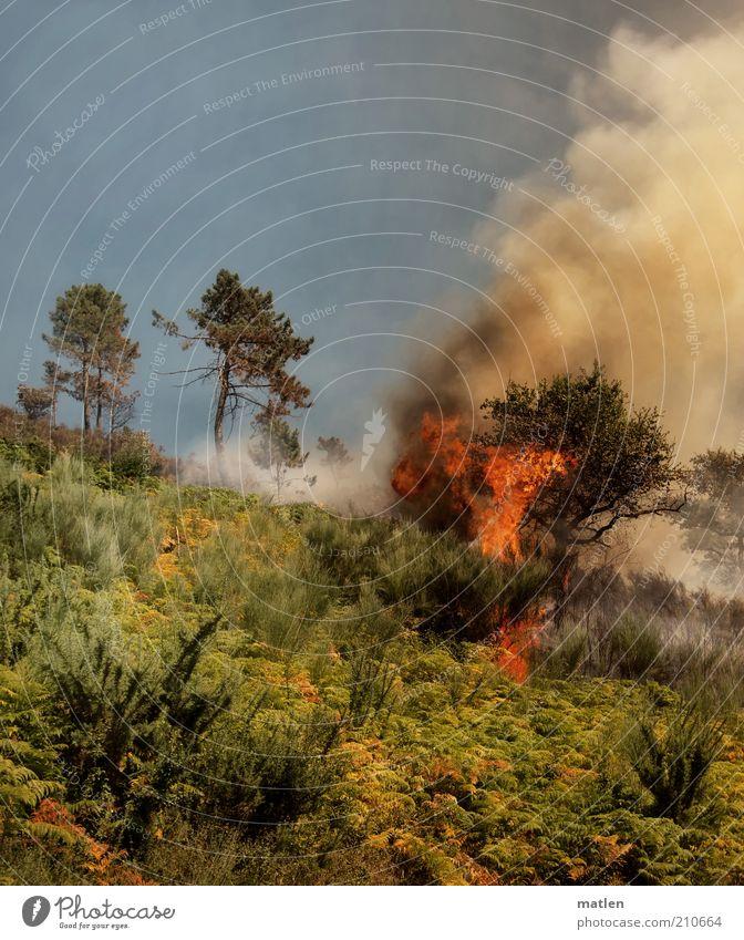Feuerland Natur Landschaft Sommer Baum Gras Sträucher Wald Berge u. Gebirge Rauch Desaster bedrohlich Flamme Wärme Farbfoto Außenaufnahme Menschenleer