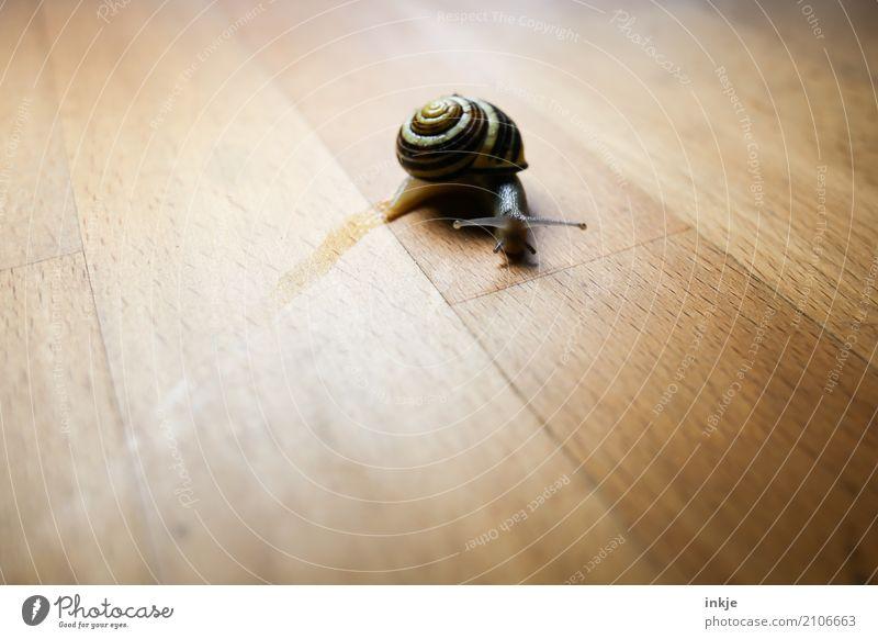 scharfe Kurve Tier Holz braun Textfreiraum einzeln Holztisch Schnecke krabbeln beige Tischplatte Vignettierung Schneckenhaus schleimig Schleim Kriechspur