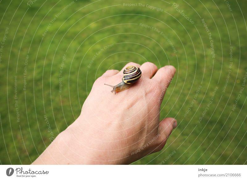 handzahm 3 Farbfoto Außenaufnahme Nahaufnahme Handrücken Schnecke krabbeln Tier schleimig Natur grün Weisheit beobachten Tierporträt Ganzkörperaufnahme klein
