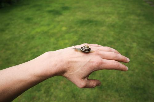 handzahm 2 Farbfoto Außenaufnahme Nahaufnahme Handrücken Schnecke krabbeln Tier schleimig Natur grün Weisheit beobachten Tierporträt Ganzkörperaufnahme klein