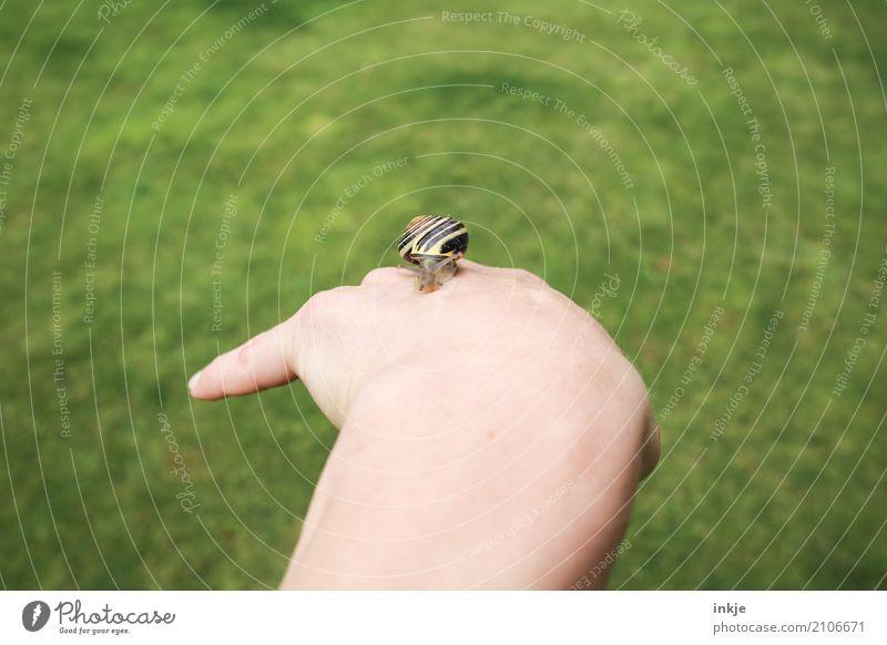 handzahm 1 Hand Wiese Schnecke Tier beobachten festhalten klein nah natürlich Neugier niedlich Vertrauen Tierliebe friedlich achtsam Vorsicht Interesse Natur