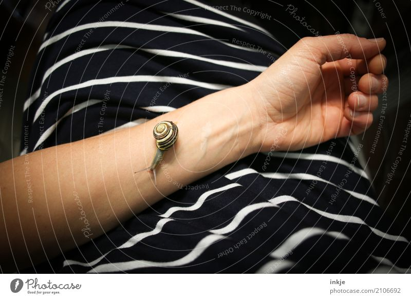 Zeit haben | Schneckentempo 9 Arme 1 Mensch T-Shirt Kleid Stoff Tier Wildtier Linie gestreift beobachten klein Tierliebe friedlich achtsam Vorsicht geduldig