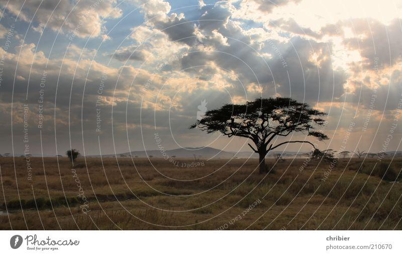 Adieu, Serengeti... Natur Baum Pflanze Ferien & Urlaub & Reisen Wolken ruhig Erholung dunkel Landschaft Umwelt Gras Park Horizont Afrika Hügel Sehnsucht