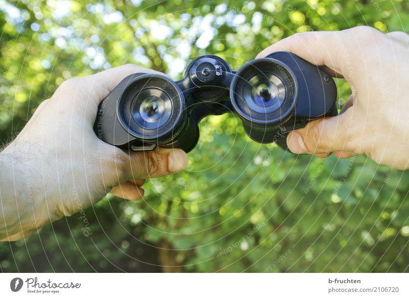 Voyeur Mann Pflanze Sommer grün Hand Ferne Erwachsene Auge Freiheit Aussicht Sträucher beobachten Neugier geheimnisvoll entdecken festhalten