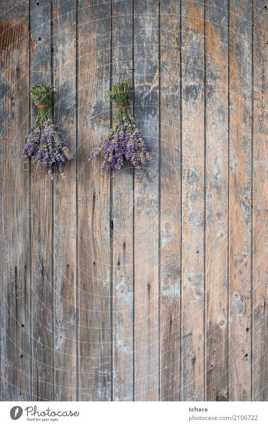 Lavendel Kräuter & Gewürze Stil Design Haus Dekoration & Verzierung Natur Pflanze Blüte Fassade Blumenstrauß Holz frisch natürlich blau braun Tür Konsistenz