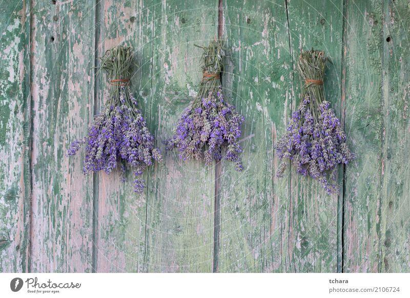 Lavendel Parfum Gesundheitswesen Natur Pflanze Sommer Blume Blatt Blüte Holz Ornament alt frisch natürlich grün violett purpur Beautyfotografie Kräuterbuch