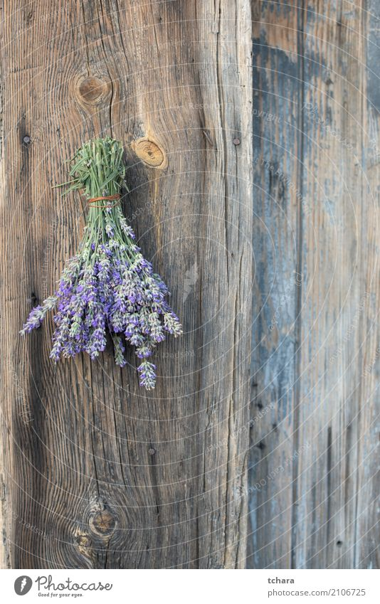 """Lavendel Natur Pflanze Blume Blatt Blüte frisch natürlich grün purpur Beautyfotografie Kräuterbuch Haufen Gesundheit geblümt organisch Medizin """"Herb"""". Kraut"""