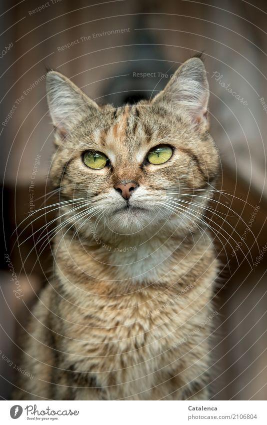 plem plem | find ich es im Moment Katze Tiegerkatze 1 Tier beobachten sitzen schön klein braun gelb grün achtsam Gelassenheit Selbstbeherrschung Neugier