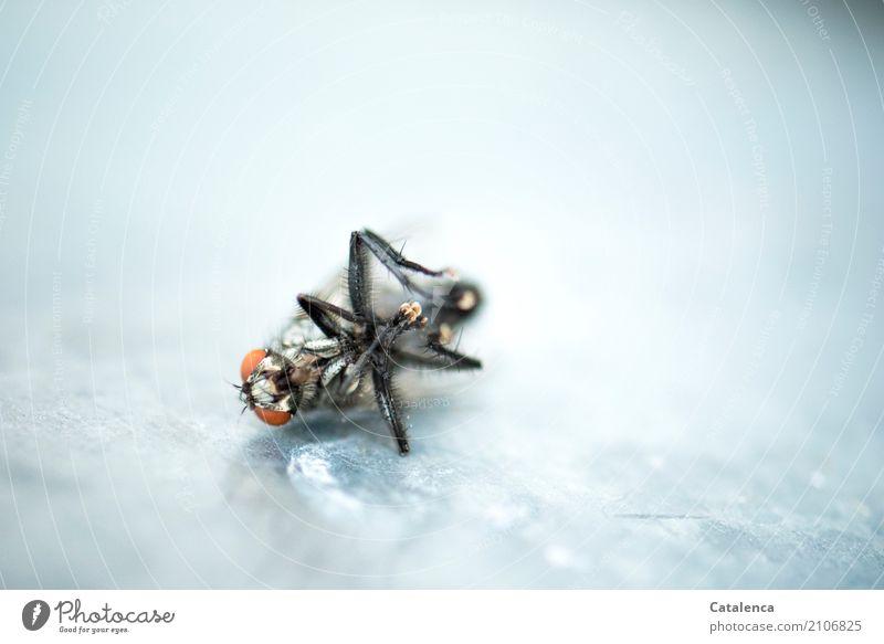 Irreparabel | Kaputt Garten Fensterbrett Insekt Fliege 1 Tier Metall liegen dehydrieren trocken braun gold orange schwarz silber Tod Erschöpfung Ende