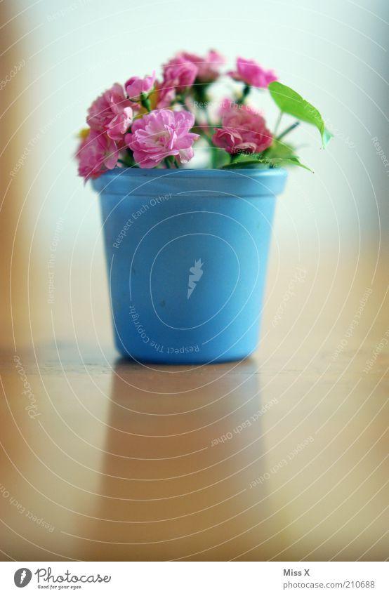 Rosen II Häusliches Leben Dekoration & Verzierung Pflanze Sommer Blume Blüte Topfpflanze Blühend Duft verblüht dehydrieren Muttertag rosa Blumenstrauß Vase