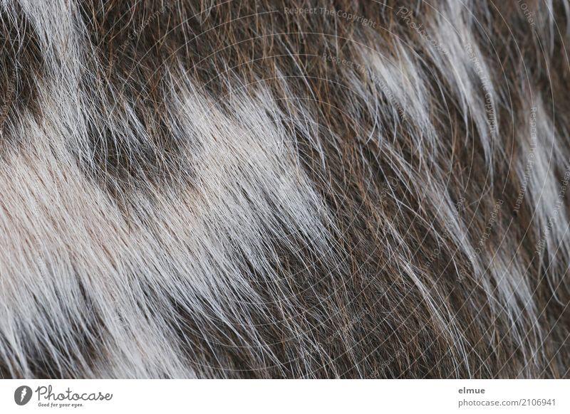 Fell ... von der Kuh (2) Natur weiß Leben natürlich Haare & Frisuren braun Design ästhetisch Abenteuer einzigartig Idee einfach Romantik Sauberkeit